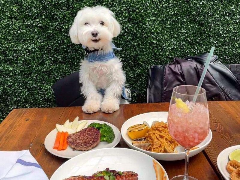 dog with it's paws on the table at a dog friendly restaurant