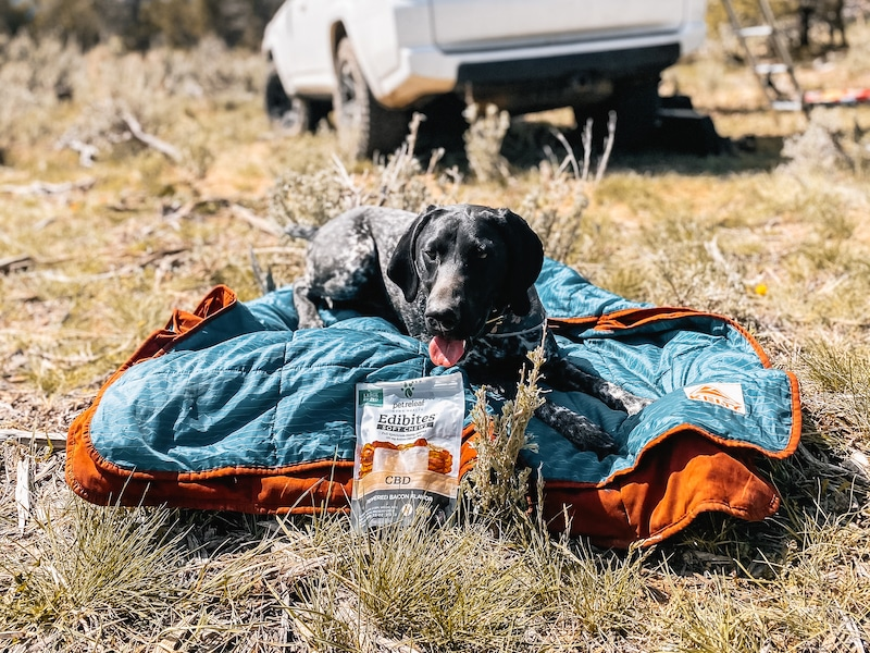 Dog laying on a blanket outdoors with a bag of Edibites CBD Chews
